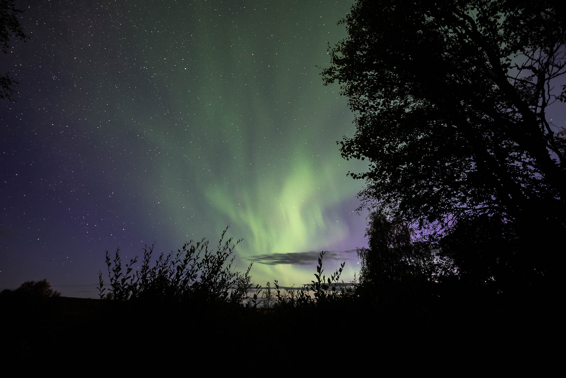 Harriniva autumn auroras web 3