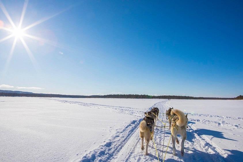 Dog sledding in Nellim, Finland by Dave Shenton
