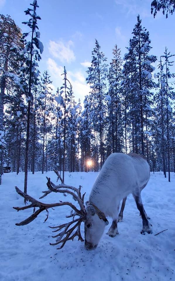 Robyn Winter Nellim AuroraZoneMoments 3