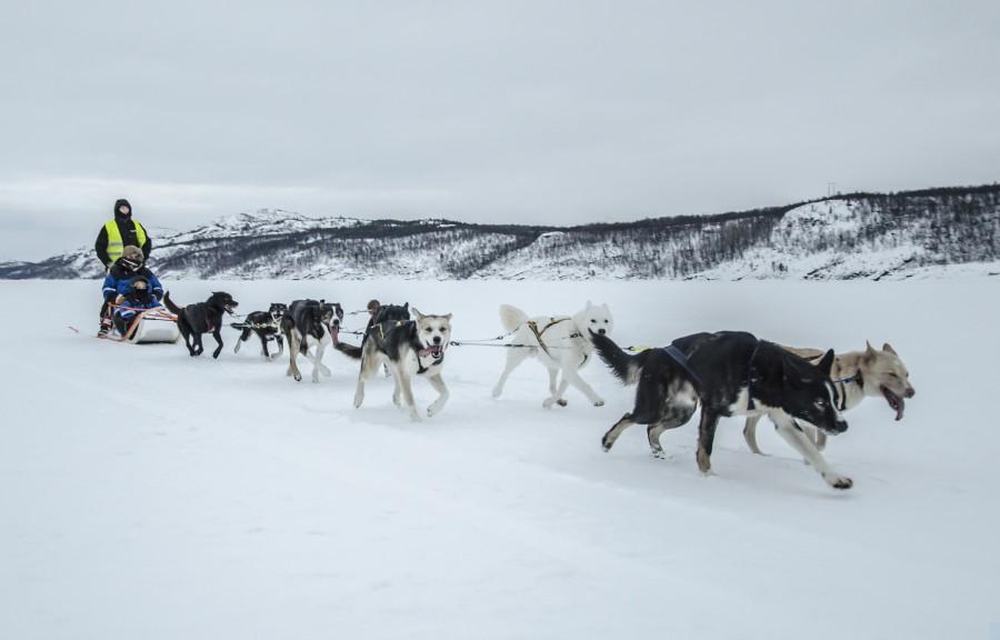 Active Short Northern Lights Break In Kirkenes Norway