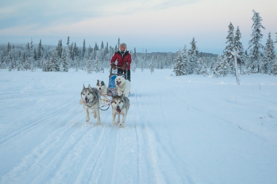 Hunt for the Northern Lights in Finnish Lapland
