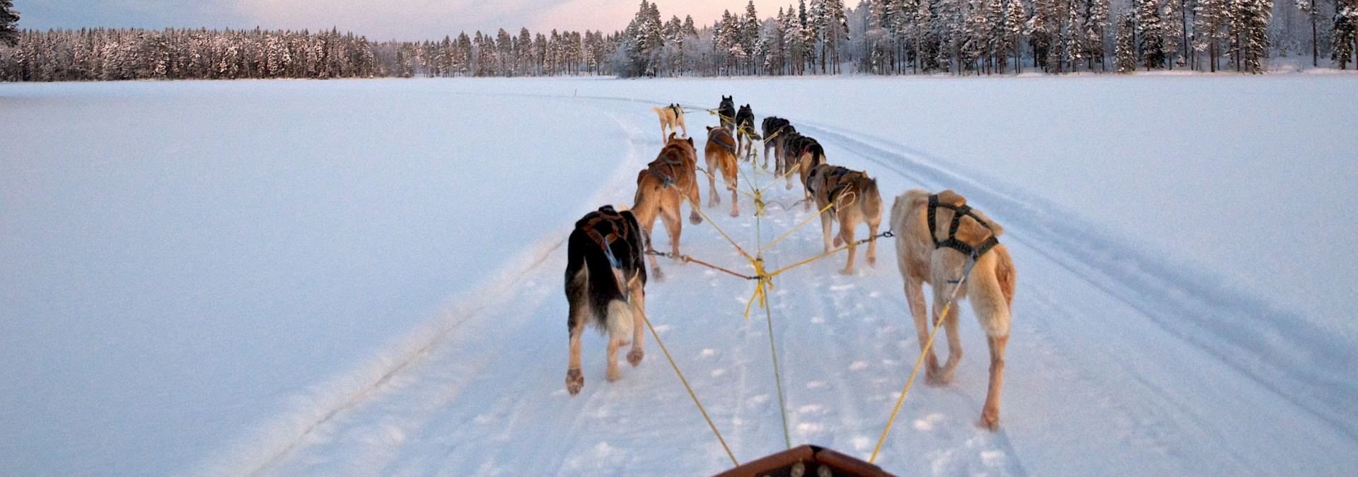 Dogsledding-Graeme-Richardson-17.jpg